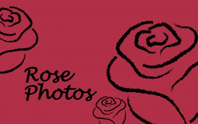 Rose Photography Branding